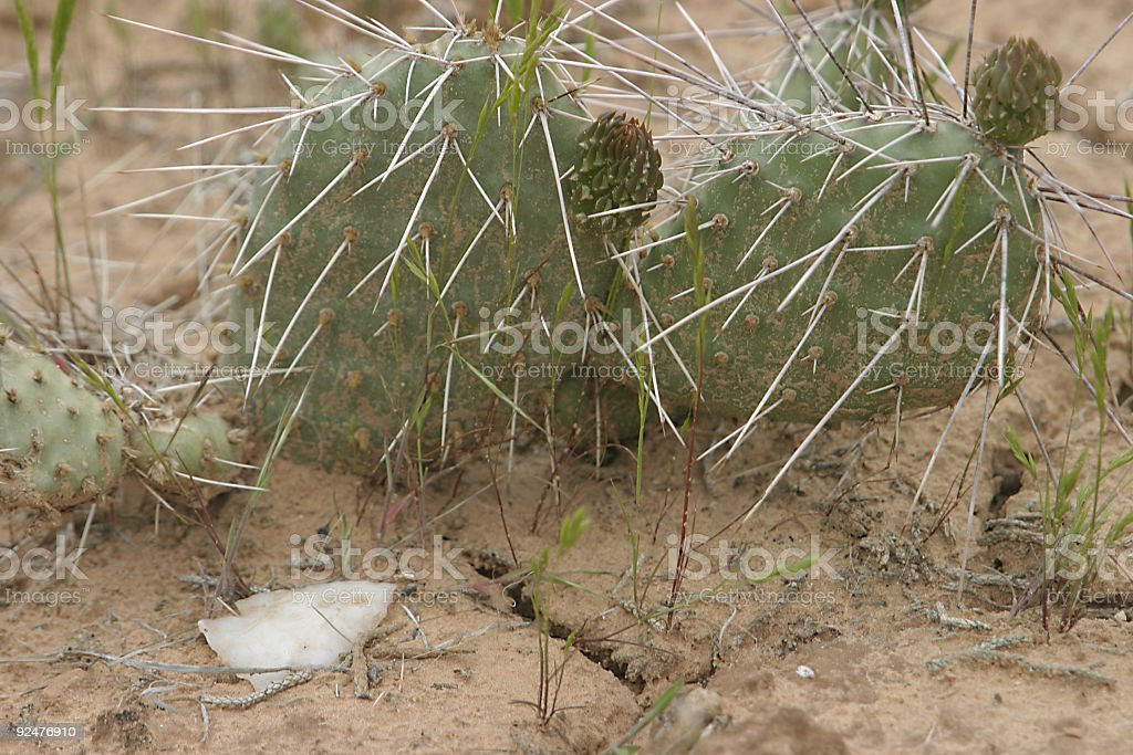 arrowhead and cactus royalty-free stock photo