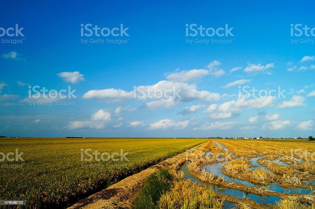 Arrozal cosechado en el Delta del Ebro stock photo
