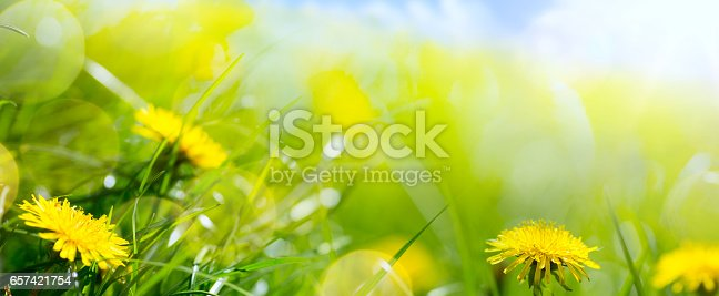 643781968 istock photo art abstract floral spring or summer background with fresh grass and spring flower 657421754