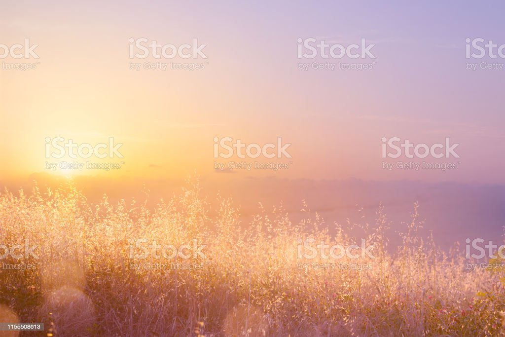 Art abstract  natural background; summer sunny meadow - Royalty-free Abstrato Foto de stock