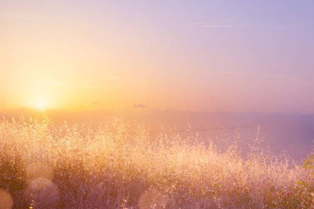 Art abstract  natural background; summer sunny meadow Art abstract  natural background; summer sunny meadow tranquil scene stock pictures, royalty-free photos & images