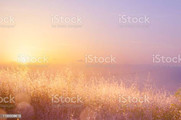 Art Abstract Natural Background Summer Sunny Meadow - Fotografias de stock e mais imagens de Abstrato
