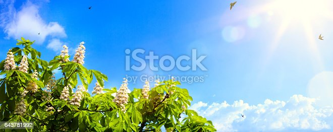 643781968 istock photo art abstract spring background background with spring flowers on blue sky background 643781992