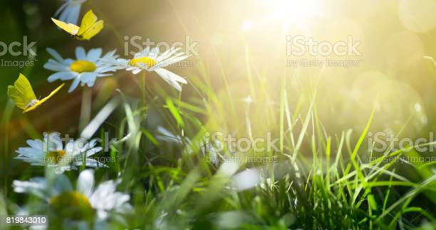Art abstract spring background or summer background with fresh and picture id819843010?b=1&k=6&m=819843010&s=612x612&h=ddkepouyvm1onwbef3t3isfz1xma1jwhwite5njip s=