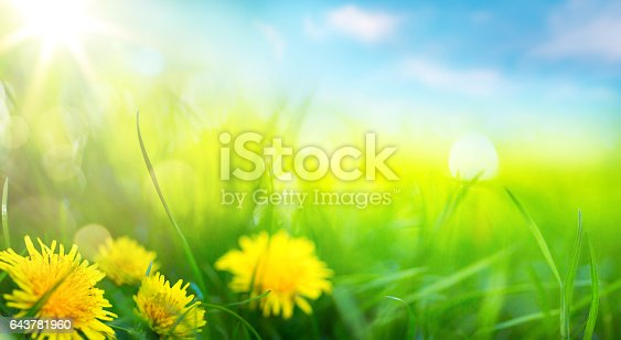 643781968 istock photo art abstract spring background or summer background with fresh grass 643781960