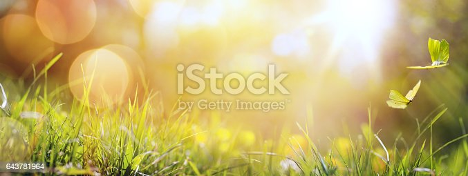 643781968 istock photo art abstract spring background or summer background with fresh grass and butterfly 643781964