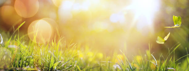 Art abstract spring background or summer background with fresh grass picture id643781964?b=1&k=6&m=643781964&s=612x612&w=0&h=qa gxf5ch0eamaome0qughbrujh7rmd765fouyzfkze=