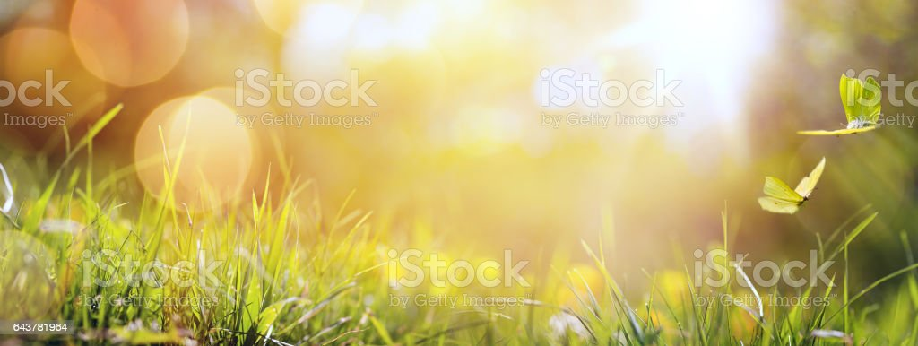 art abstract spring background or summer background with fresh grass and butterfly stock photo