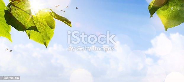643781968 istock photo art abstract spring background or summer background with fresh trees leaves on blue sky background 643781990