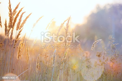 istock Art autumn sunny nature background 489612632