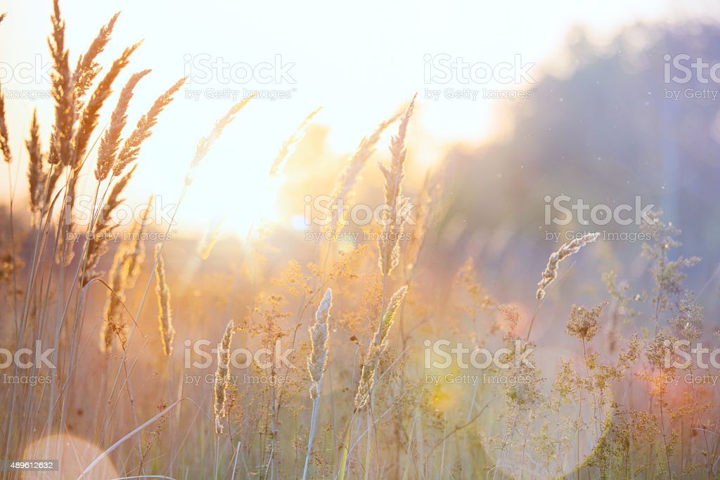 Art autumn sunny nature background stock photo