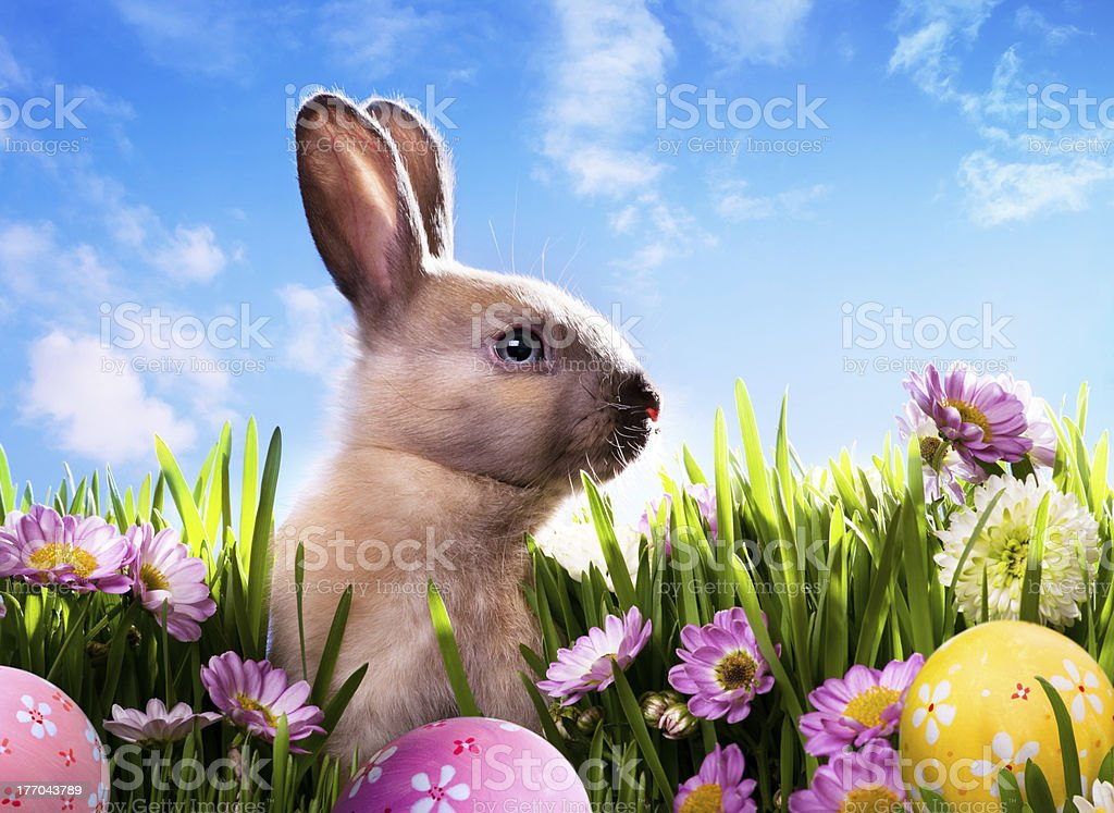 art baby Easter bunny on spring green grass royalty-free stock photo