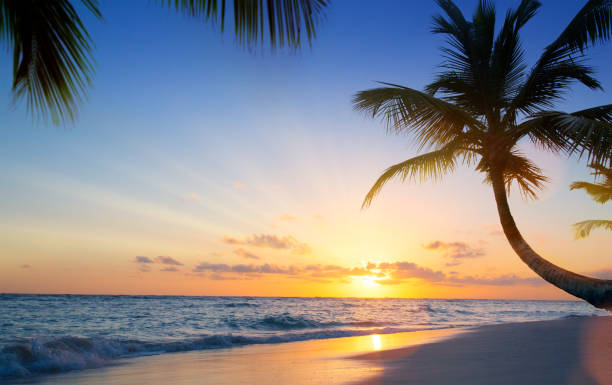 art beautiful sunset over the tropical beach - fiji stock photos and pictures