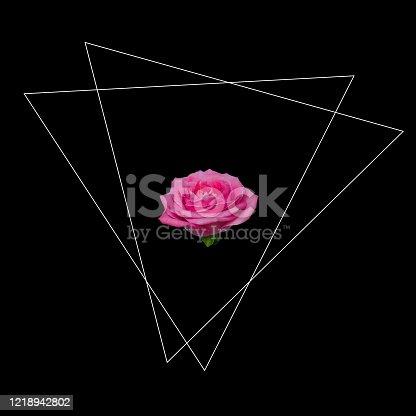 Art collage of pink rose bud flower with geometric figure on minimalist black background