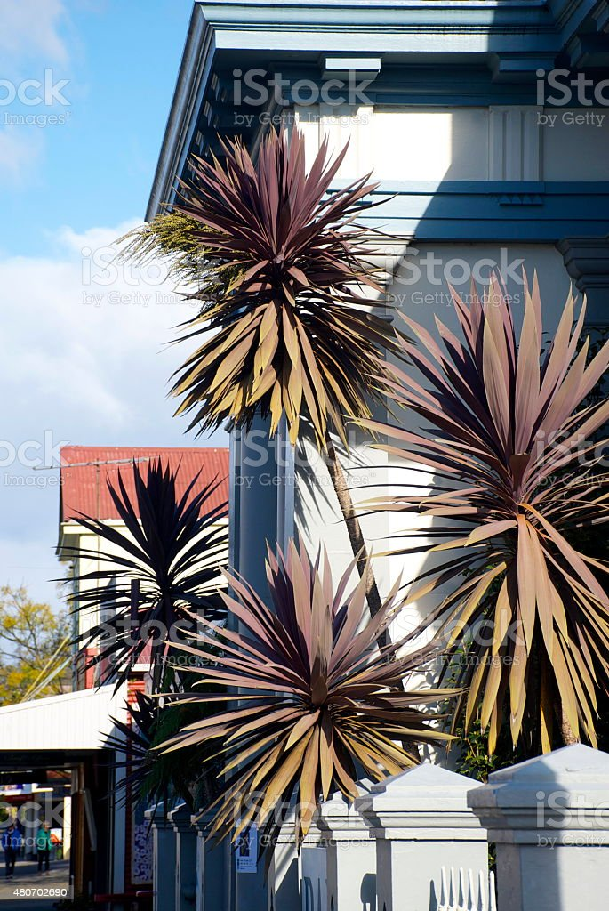 Art Deco Building Facade and Cabbage Tree, New Zealand stock photo