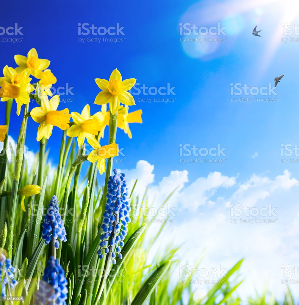 art Easter background with fresh spring flowers stock photo