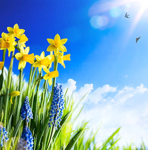 art fond de pâques avec des fleurs de printemps - paysage mois de mars photos et images de collection