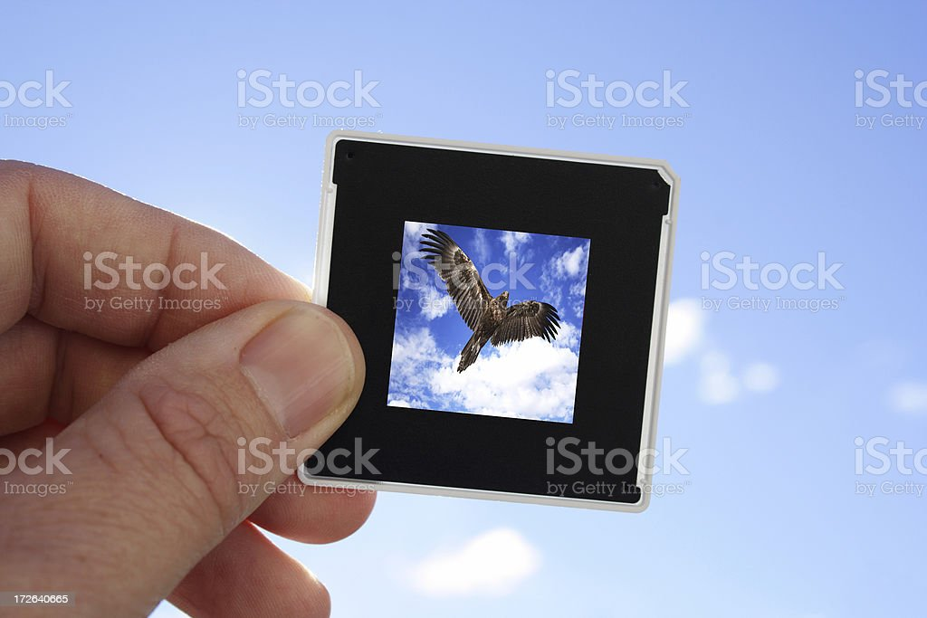 Art imitating Life royalty-free stock photo