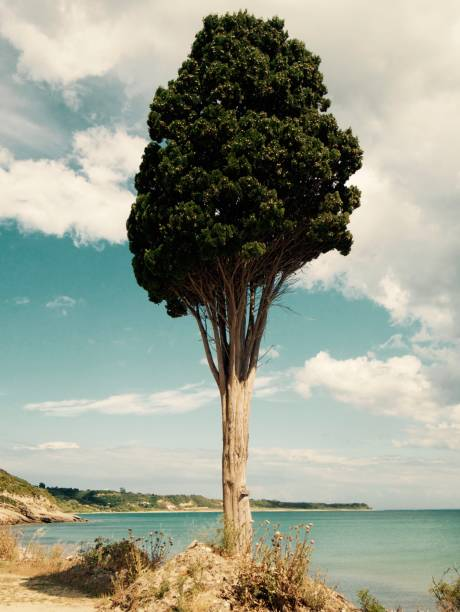 kunst in seiner besten form - sprüche über reisen stock-fotos und bilder