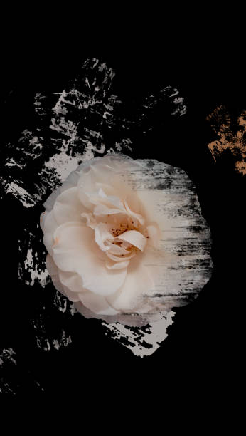 Art ivory rose flower. Themes for smartphone. stock photo