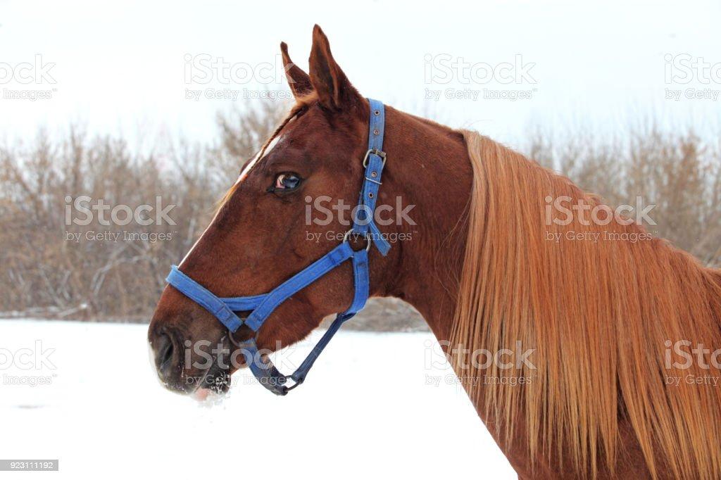 Art portrait of beautiful breed sportive horse stock photo