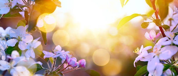 art Spring Blooming background stock photo