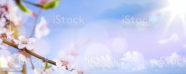 Art spring blossom background picture id510152270?b=1&k=6&m=510152270&s=612x612&h=fgh qxhpeanzs4xevubrhfsvmnajkm77pc urd9i 3y=