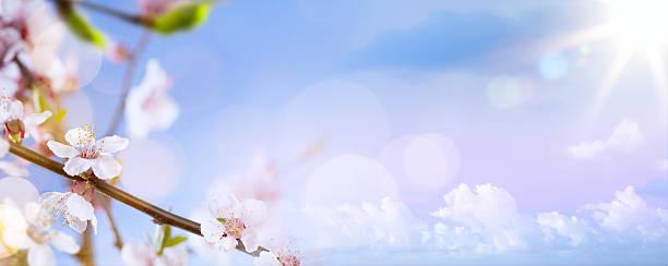 art Spring blossom background stock photo