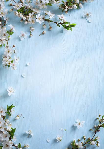 art Spring border background with white blossom stock photo