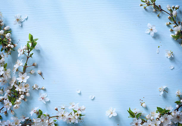 Art spring border background with white blossom picture id508261494?b=1&k=6&m=508261494&s=612x612&w=0&h=y9ilfx73kueefx7vfvkzijphe140ldz19pmhgcaovgm=
