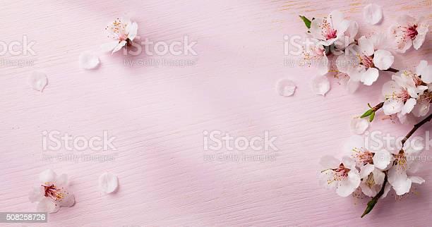 Art spring flowers frame background picture id508258726?b=1&k=6&m=508258726&s=612x612&h=senzgvzxqsgjopchy0ofnigbq6z0h3zk7xspn9lwfl4=