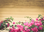 istock Art summer  flowers frame background .Pink flowers on gray wooden boards 1020072120