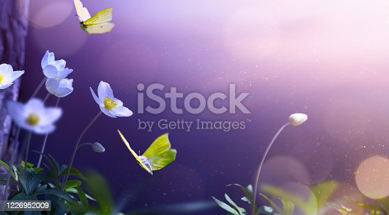 Art white flowers and fly butterfly; spring or summer nature floral background