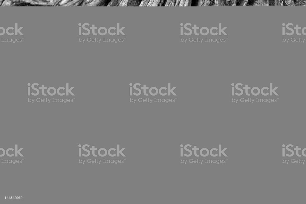 Arteries and Veins (XXL) stock photo