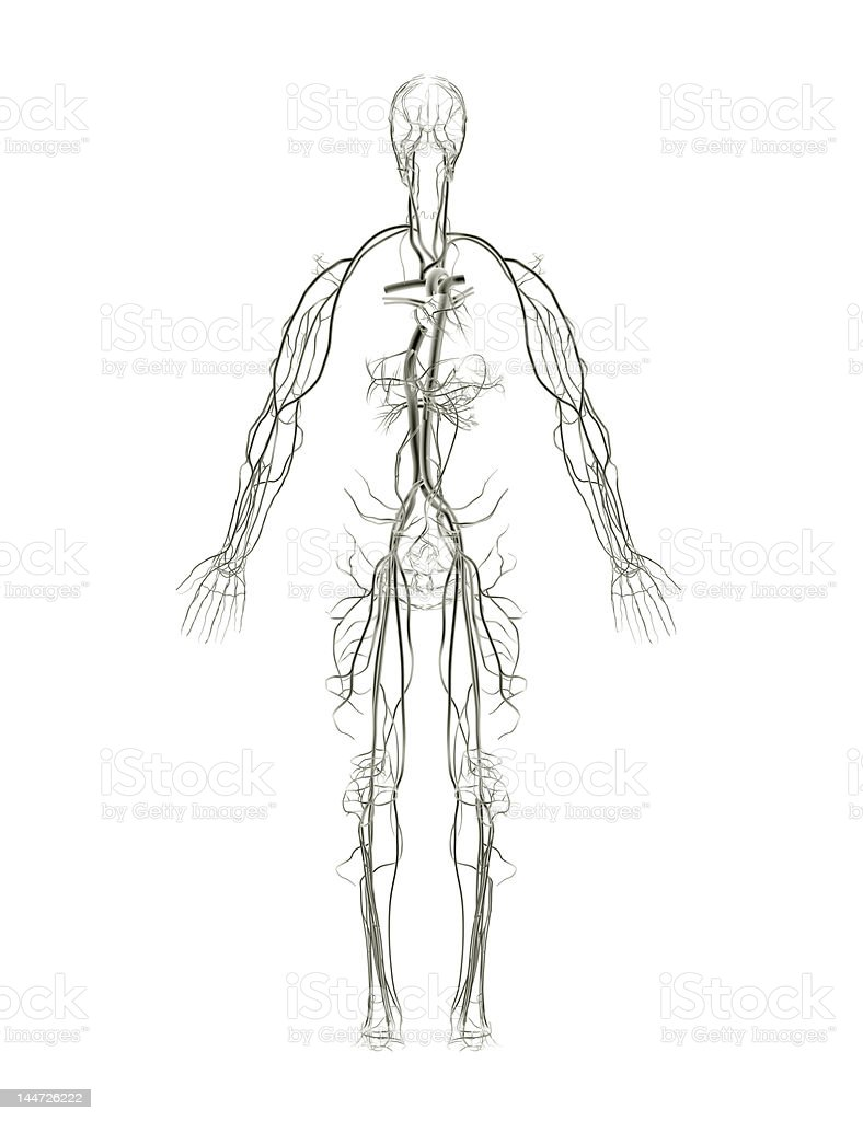 Arteries and Veins X-ray stock photo