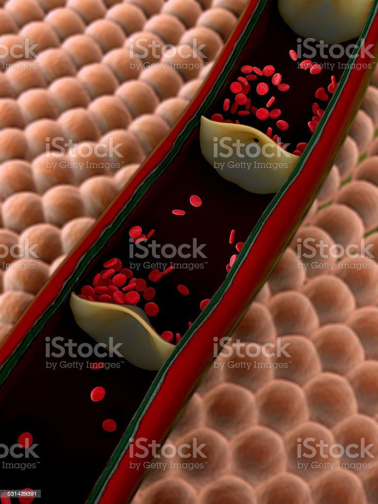 artery, erythrocyte stock photo