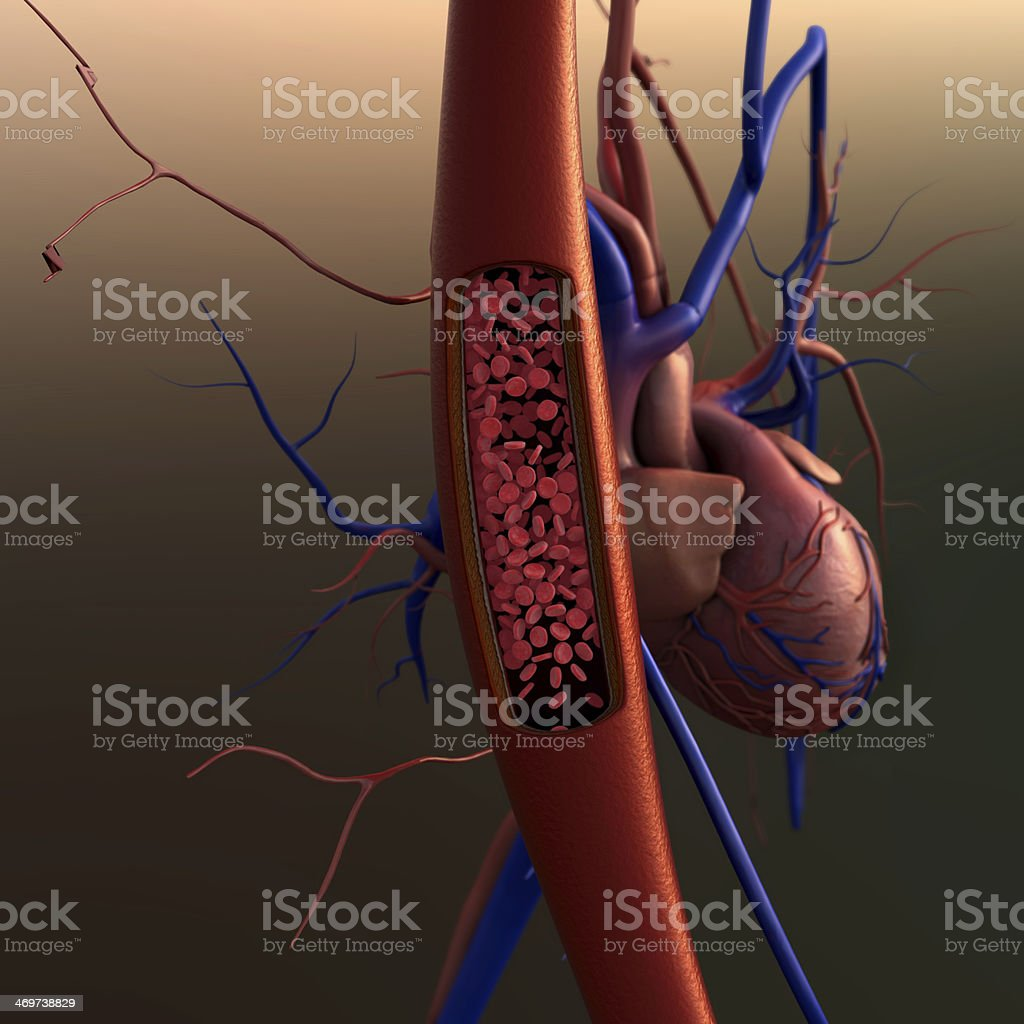 artery, heart stock photo