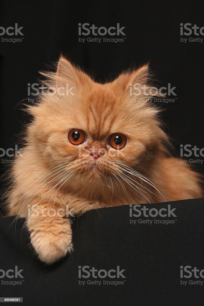 Искусные cat Стоковые фото Стоковая фотография