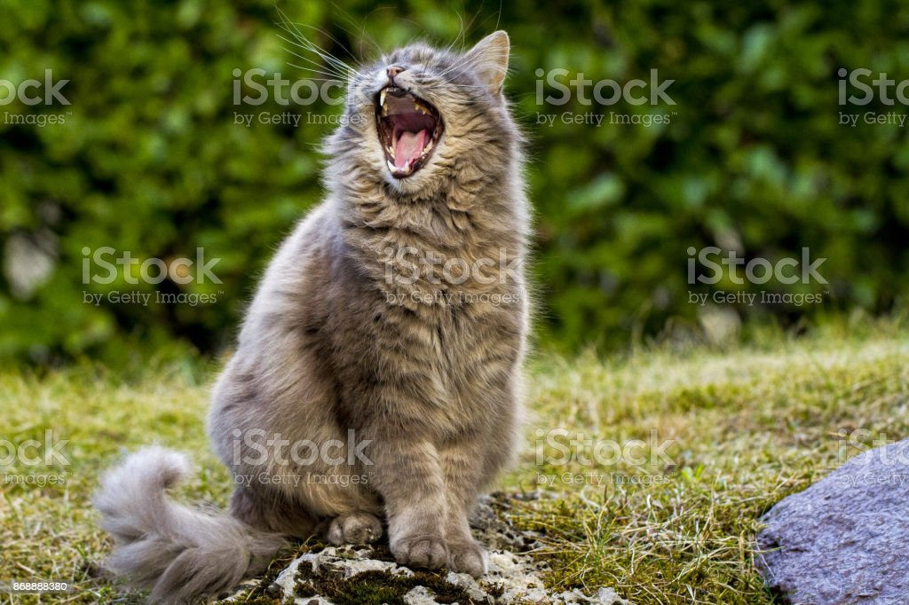 Arturo il gatto stock photo