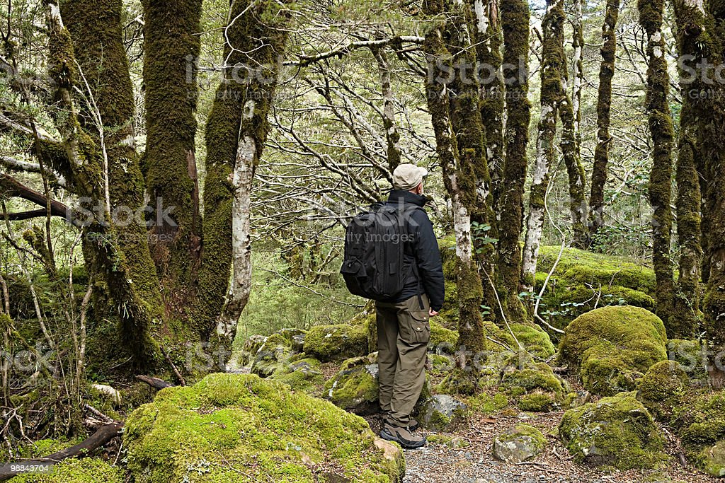 Arthur's Pass, hiking man in rain forest royalty-free stock photo