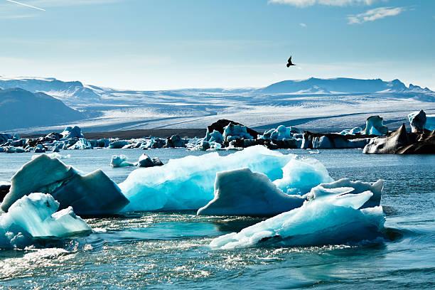 Artic tern over Icebergs stock photo