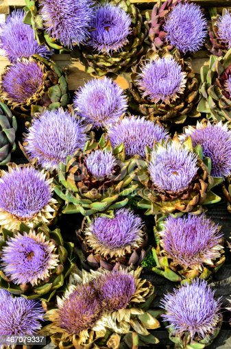 Purple Artichoke Flowers at late Summer