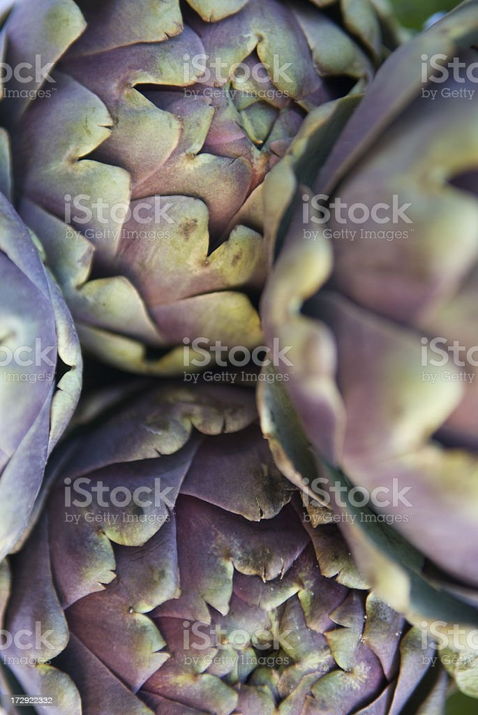 Artichokes Abstract Full Frame royalty-free stock photo