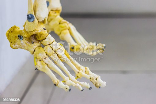 istock articulated tarsal metatarsal and phalanges bones showing human foot anatomy in white background 959268308