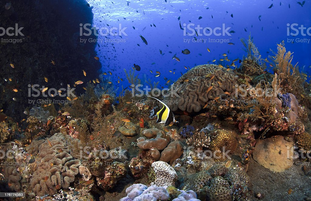 Artifical coral reef royalty-free stock photo