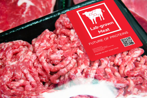 Carne cultivada en laboratorio de carne de vacuno artificial en el campo emergente de producción de alimentos con etiqueta. Tendencia futura de la biotecnología, concepto alimentario artificial 4,0. - foto de stock