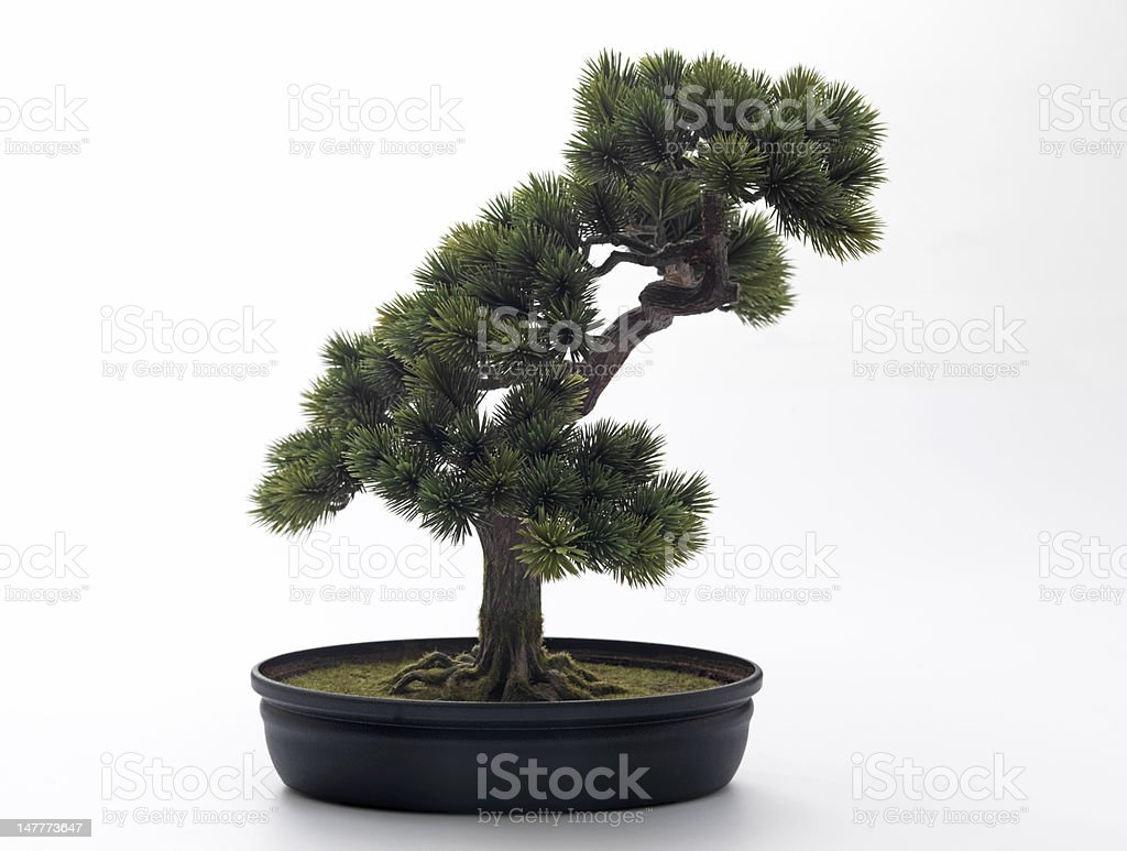Artificial Bonsai Tree Stock Photo Download Image Now Istock