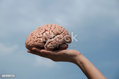 istock Artificial brain model and hand 692698752