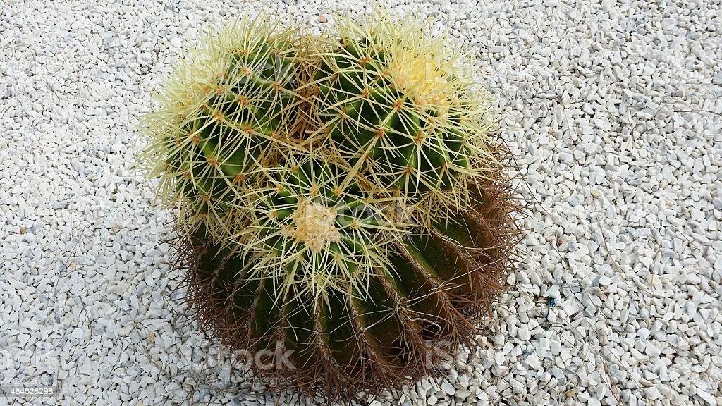 Artificial cactus stock photo