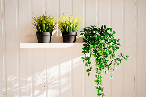 artificial flowers in pots on shelves against the white wall. houseplants in the interior.